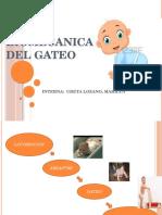 Biomecanica Del Gateo