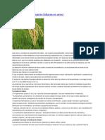 Absorción y Fertilizantes Foliares en Arroz