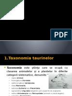 tomuta ppt 1.pptx