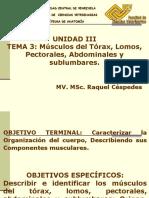Miologia Torax Abdomen Pectorales Lomos