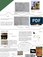 Altamira historia de la arquitectura