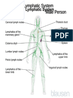 The Lymphatic System