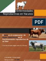 Enfermedades aparato reproductor.pptx