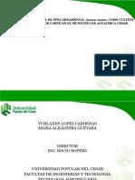 Evaluación de La Planta de Piña Ornamental