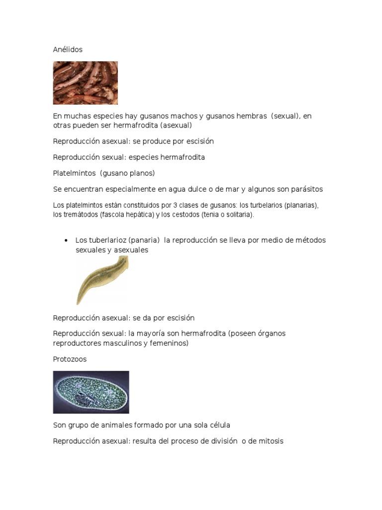 Ótvar hermafrodita. Magyar etimológiai nagyszótár (Tótfalusi István)