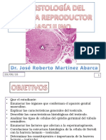 33 Histologia Del Sistema Reproductor Masculino