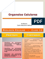 Clase 12 - Organelos Celulares