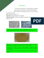 Bacterias Acido Lacticas 3 Hechas