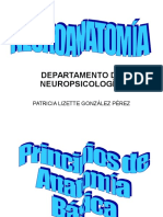 Neuroanatomía Patty