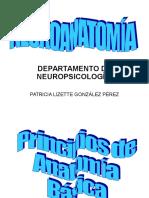Neuroanatomía Patty