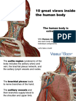 VB_AnatomyAtlas_Preview_112513.pdf