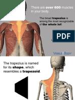 VB_Trapezius_030714.pdf
