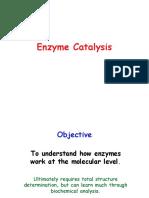 Enzyme Cat Alys Is