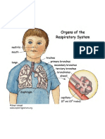 respiratory_system.pdf