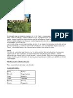 6. Carrizo y Orquidea Abejera.odt