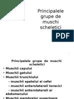 Principalele Grupe de Muschi Scheletici