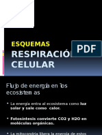 Esquemas Respiracion Celular