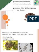 Alteracion Microbiologia en pasas