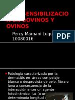 FOTOSENSIBILIZACION EN BOVINOS Y OVINOS.pptx