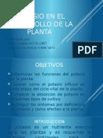 Potasio en El Desarrollo de La Planta