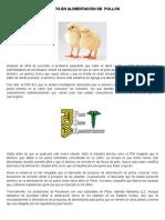 ALERTA EN ALIMENTACIÓN DE  POLLOS.docx