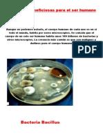 Bacterias-beneficiosas-para-el-ser-humano.docx