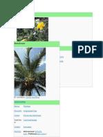 Biodiversidad de Las Plantas