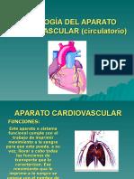 fisiologc3ada-del-aparato-cardiovascular-circulatorio.ppt