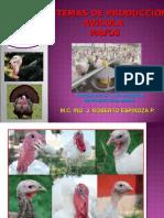 Sistemas de Produccion Avicola - Pavos