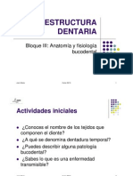 4UD Estructura dentaria