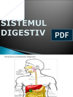 Sistemul Digestiv, Mihaela Paduraru