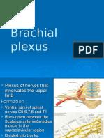 Brachial Plexus Lecture