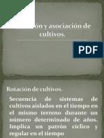 rotacinyasociacindecultivos