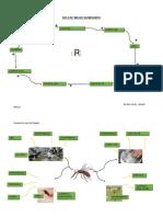 Ciclo de Vida de Un Mosquito