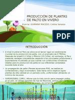 Manejo-del-palto-en-vivero-pptx.pdf