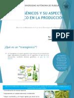 Transgenicos Ensayo Presentacion