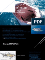 the great white shark ppt