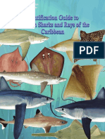 Identification guide to common sharks and rays of the Caribbean