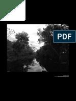 Espacios, Campesinos y Subjetividades Ambientales en El Guaviare