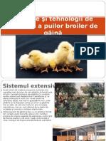 Prod Carne Pasari