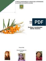 Cultivare Catina in Sistem Ecologic