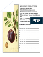 Fisa Botanica - Pruna