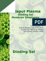 Selaput Plasma.pptx