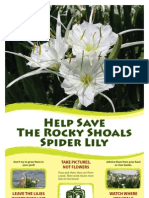About the Rocky Shoals Spider Lily