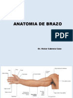ANATOMIA MMSS-BRAZO.pptx
