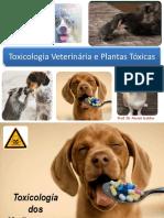 Aula 4 Toxicologia Dos Medicamentos