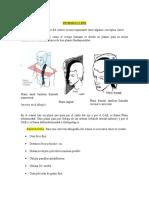 Proyecciones de Craneo - Examen