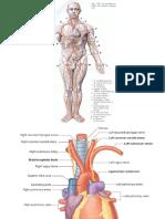 Clase 2 Circulatorio (1)