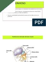Tema 2 Ejercicio Anatomía