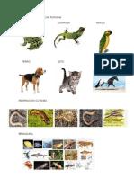 Animales Con Respiracion Pulmonar